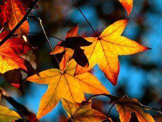 Autumn-leaves-light