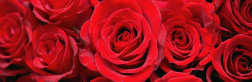 Valentines-Day-Hero-2-H