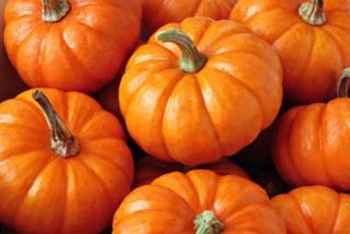 Pumpkin-592x396